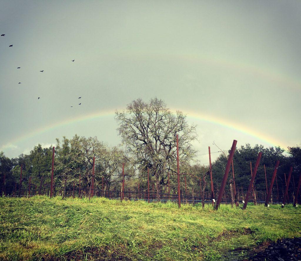 Rainbow over vineyard