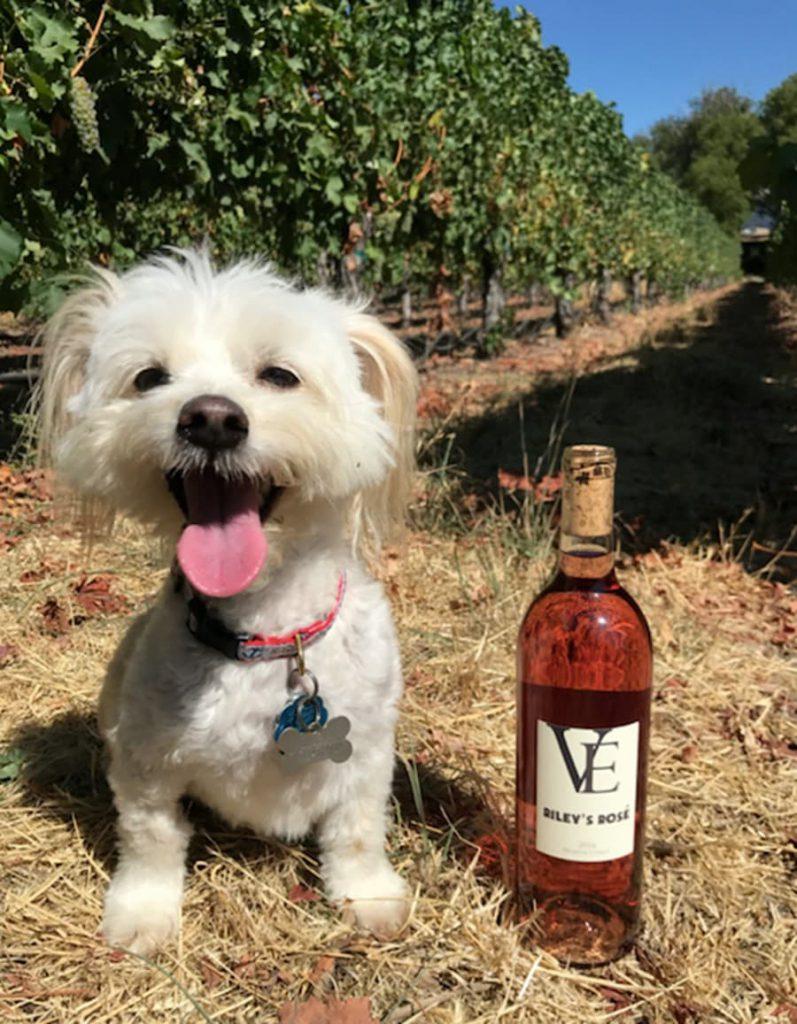 Happy dog with wine